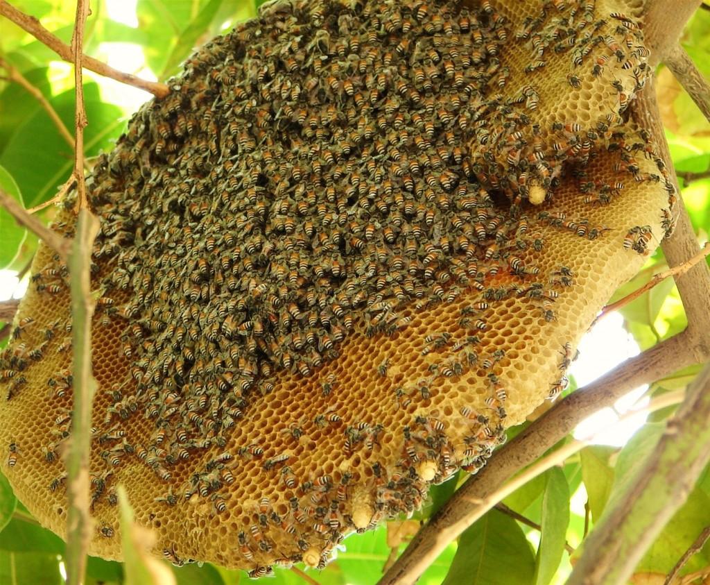 Mật Ong Rừng Nguyên Chất Là Gì