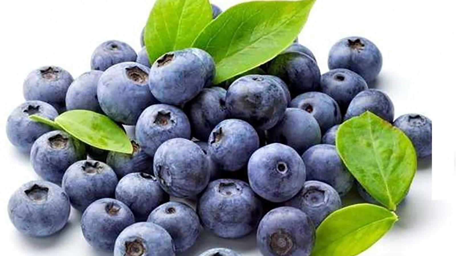 Bảo quản trái việt quất