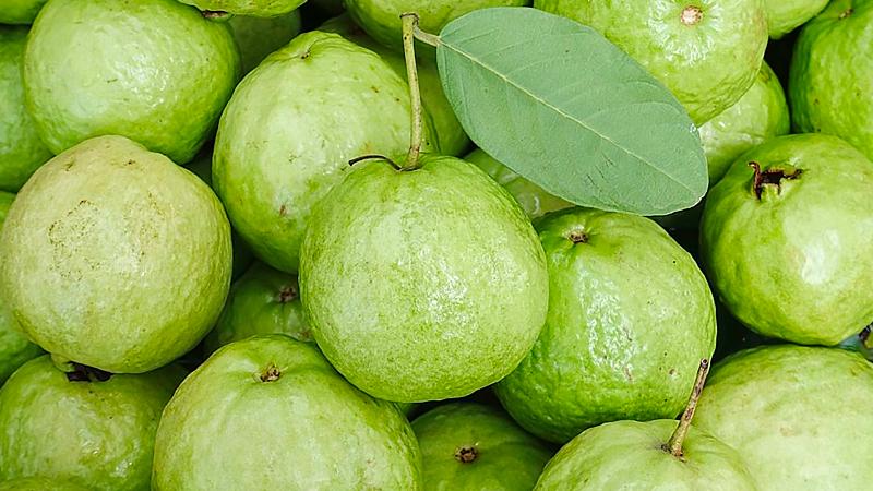 Mua Ổi Ở Đâu Ngon Tại Hà Nội, Tp.HCM, Đà Nẵng